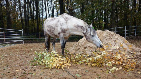 Nicht nur Heu und Hafer ist Pferdefutter