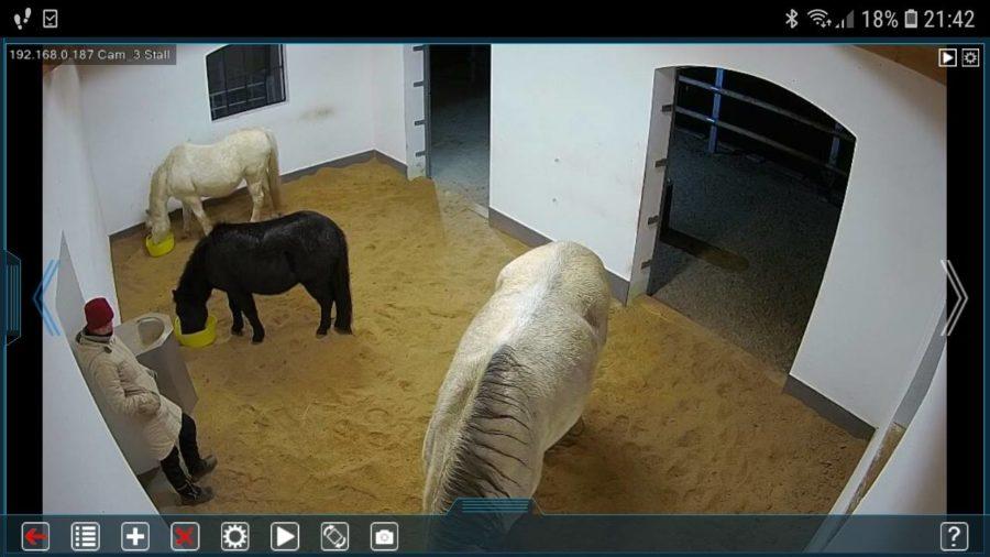 Spionage! Teil 2 - die Pferde bekommen ihr Dessert ;-)