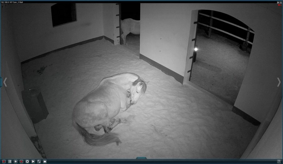 Spionage! Teil 3 - hier ein Screenshot von 2019 - Gitano schläft wieder!