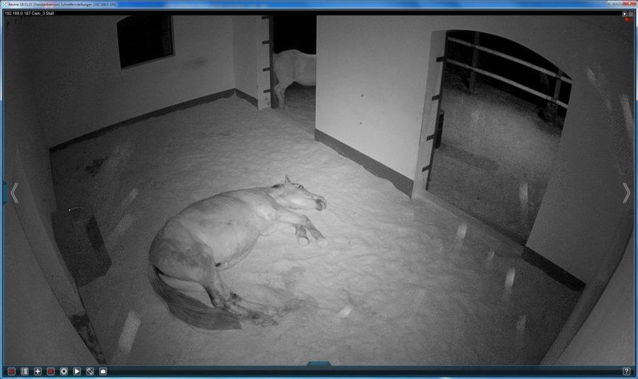 Spionage! Teil 4 - REM Schlafphase - die sorgt für erholte Pferde!